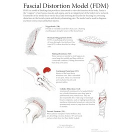 Fascial Distortion Model Poster 16x24